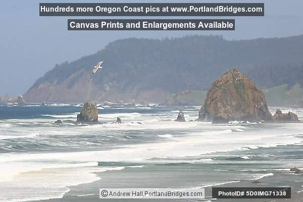 Cannon Beach, Haystack Rock, Seagull