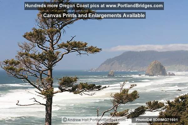 Cannon Beach, Oregon Coast, Trees