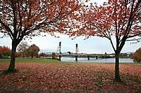 Portland Fall Leaves 2008
