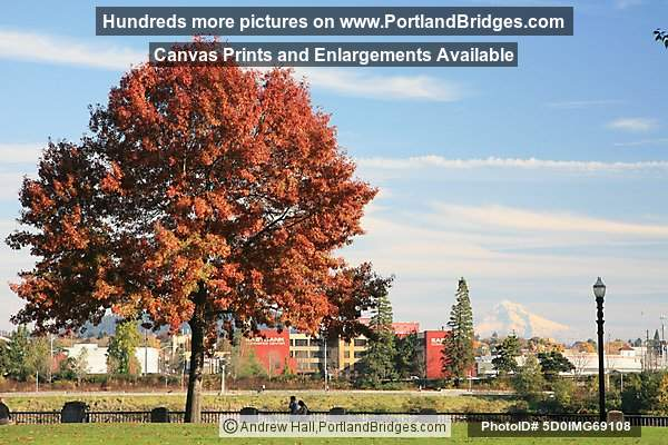 Tom McCall Waterfront Park, Fall Leaves, Mt. Hood (Portland, Oregon)