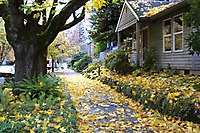 Portland FallLeaves Eastside Streets <i>(16 images) - shot on 11/20/2002</i>