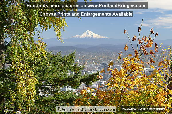 Mt. Hood, Fall Leaves from Pittock Mansion (Portland, Oregon)