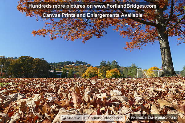 Fall Leaves in Willamette Park (Portland, Oregon)