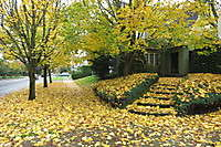 Portland Neighborhoods Fall Leaves