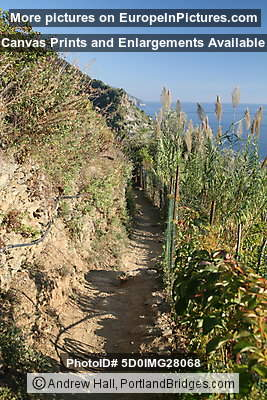 Cinque Terre: Between Vernazza and Monterosso