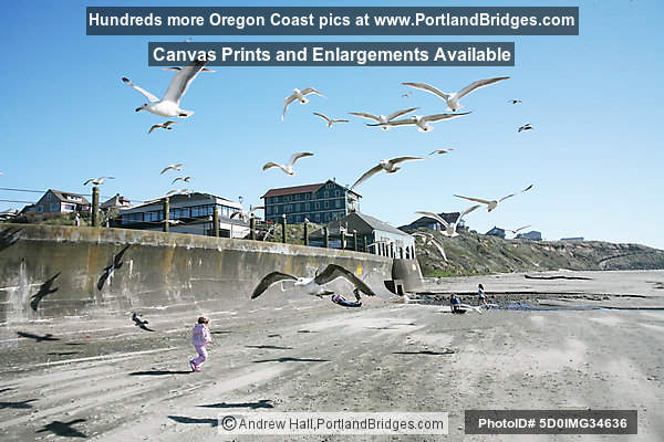Nye Beach, Seagulls, Newport, Oregon
