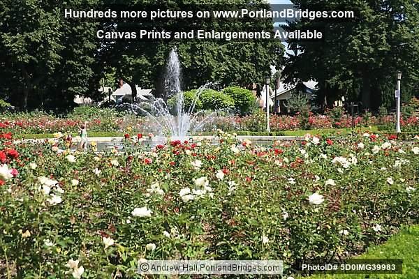 Peninsula park rose garden fountain north portland photo for Garden fountains portland oregon