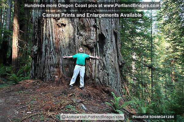 Prairie Creek Redwoods State Park, Photographer