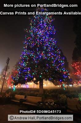 Esther Short Park Christmas Tree, Vancouver, WA Photo ...