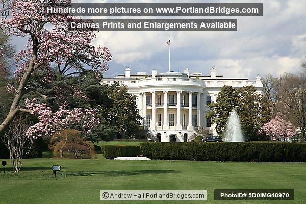 South Facade, White House, Spring Blossoms