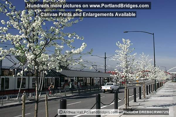 Spring Blossoms, Rose Quarter MAX Stop (Portland, Oregon)