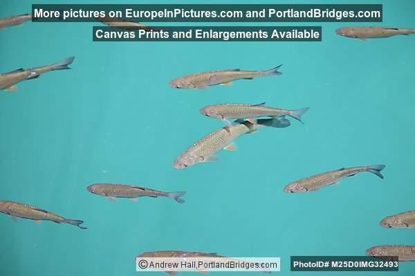 Fish, Plitvice Lakes National Park