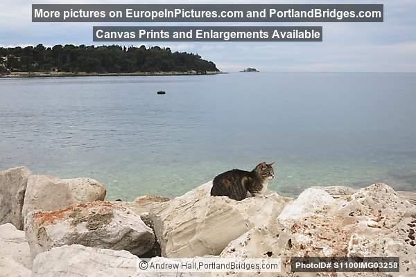 Cat on the Rocks, Rovinj Harbor