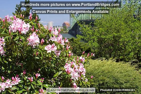 Spring Flowers at Interstate Bridge (Portland, Oregon)