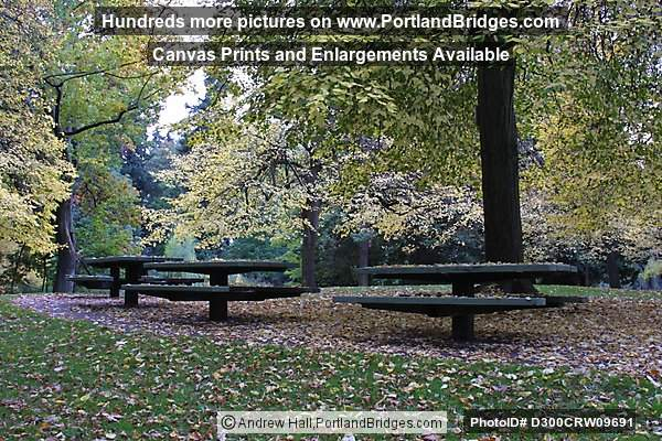 Laurelhurst Park, Fall Leaves (Portland, Oregon)