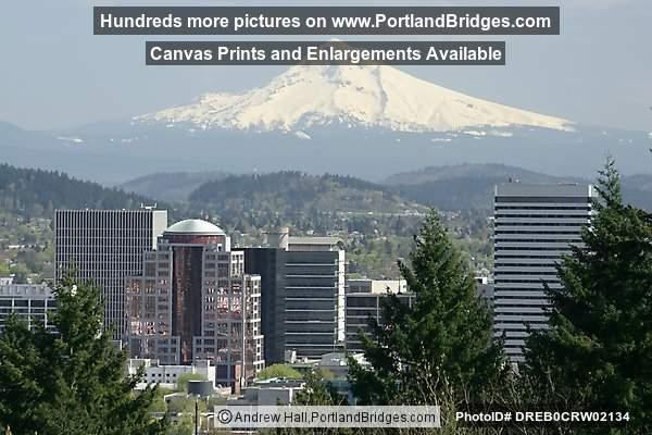 Mt Hood From International Rose Test Garden Portland Oregon Photo Dreb0crw02134