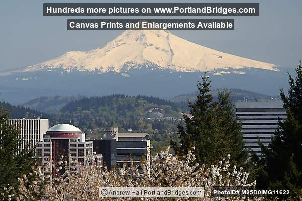 Mt. Hood, Spring Blooms, from Washington Park, Portland