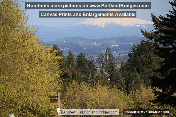 Mt. Hood from Council Crest Park (Portland, Oregon)