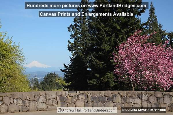 Mt. Hood, Spring Blossoms, from Council Crest Park (Portland, Oregon)