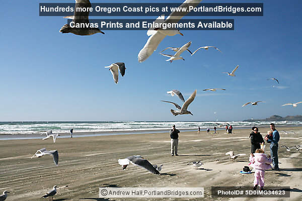 Nye Beach, Gulls, Newport, Oregon