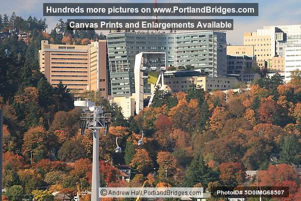 OHSU, Portland Aerial Tram, Fall Leaves
