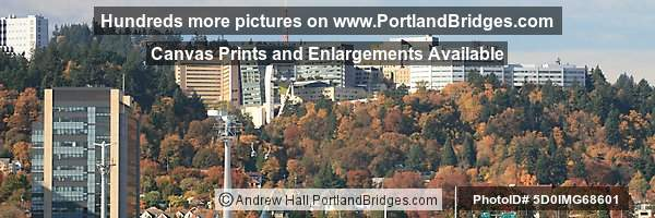 Oregon Health Sciences University (OHSU), Portland Aerial Tram, Fall Leaves
