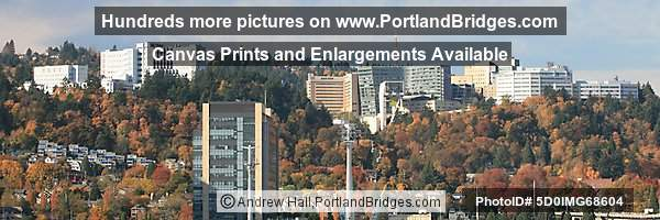 OHSU, Veterans Hospital, Portland Aerial Tram, Fall Leaves