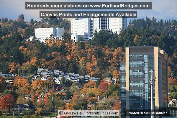 Veterans Hospital, OHSU, Portland Aerial Tram, Fall Leaves