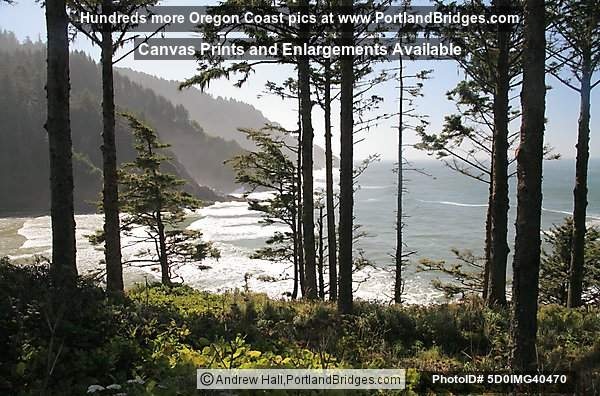 Heceta Head, Trees, Oregon Coast
