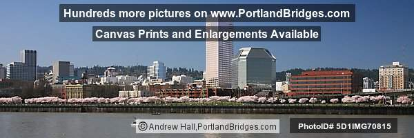 Willamette River, Waterfront Blossoms, US Bancorp Tower (Portland, Oregon)