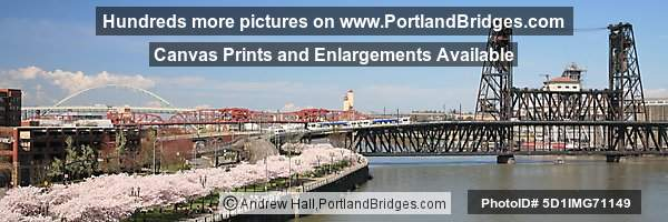 Waterfront Blossoms, Steel Bridge, Willamette River (Portland, Oregon)