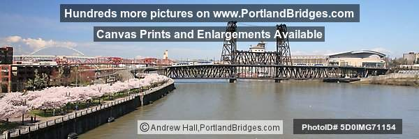 Waterfront Blossoms, Steel Bridge, Two MAX Trains, Rose Garden Arena (Portland, Oregon)