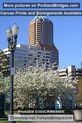 KOIN Tower, Spring Blossoms (Portland, Oregon)