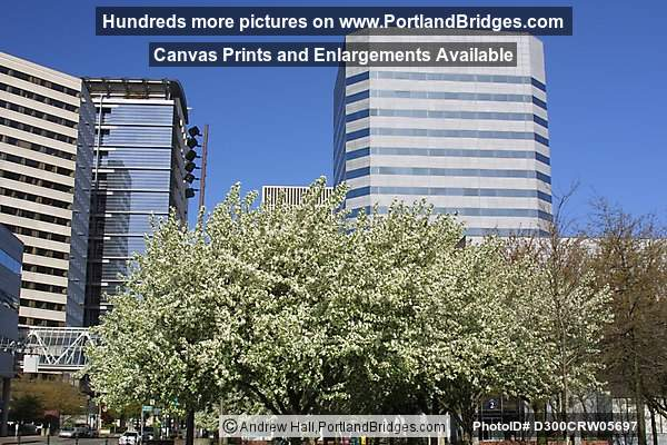 Portland World Trade Center, Spring Blossoms