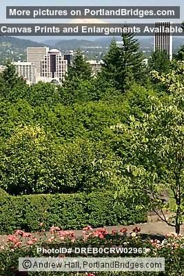 Portland Cityscape, Portland Rose Garden, Mt. Hood