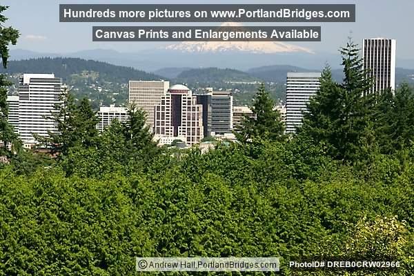 Portland City View Mt Hood From Rose Garden Photo Dreb0crw02966