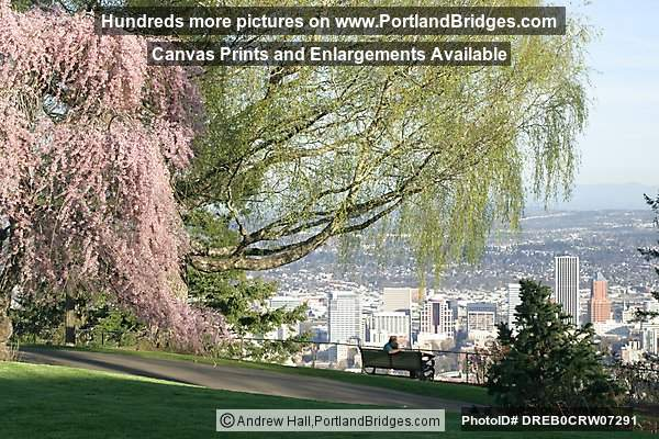 Blooming Tree, Pittock Mansion Grounds (Portland, Oregon)
