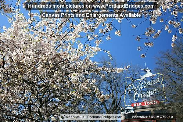 Portland, Oregon Sign, Waterfront Blossoms