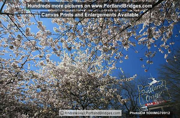 Portland, Oregon Sign, Waterfront Blossoms, Looking Up