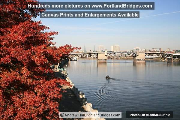 Fall Leaves, Morrison Bridge, Portland Riverfront