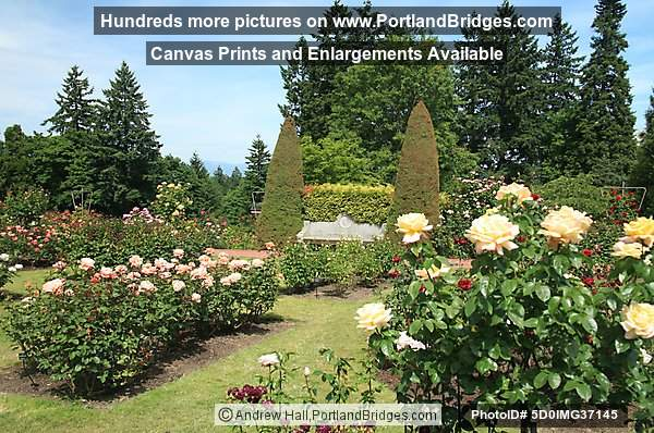 Portland International Rose Test Garden Photo 5D0IMG37145
