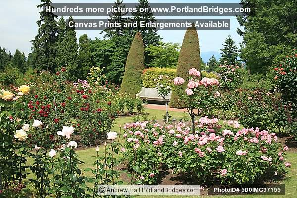 Portland International Rose Test Garden Photo 5d0img37155