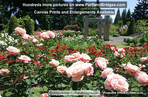 Portland international rose test garden photo dreb0crw03036 for Portland international rose test garden