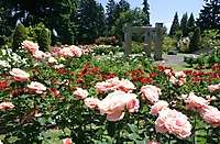 Int. Rose Test Garden