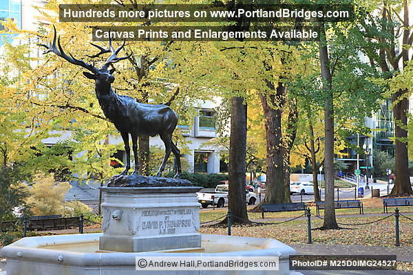 Thompson Elk, Fall Leaves, Downtown Portland