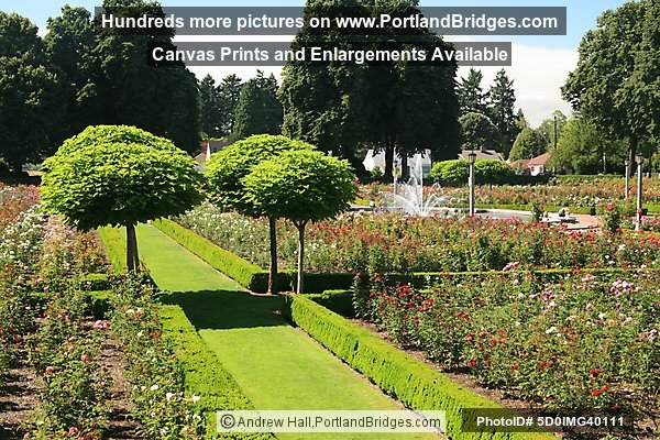 Peninsula Park Rose Garden, North Portland