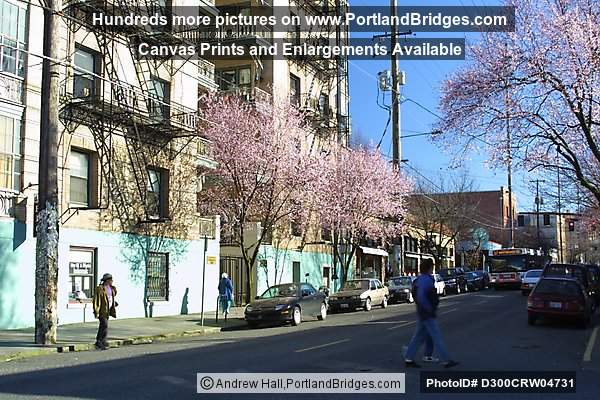 Portland Street Scenes, Spring Blossoms
