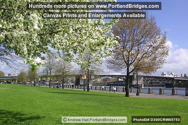 Tom McCall Waterfront Park, Spring Blossoms, 2002 (Portland, Oregon)