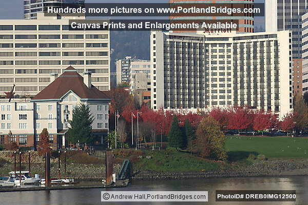 Marriott Hotel and Riverplace, Fall Leaves (Portland, Oregon)