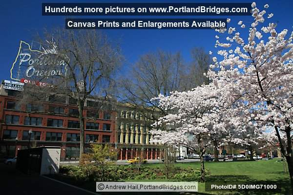 spring in Portland  Oregon